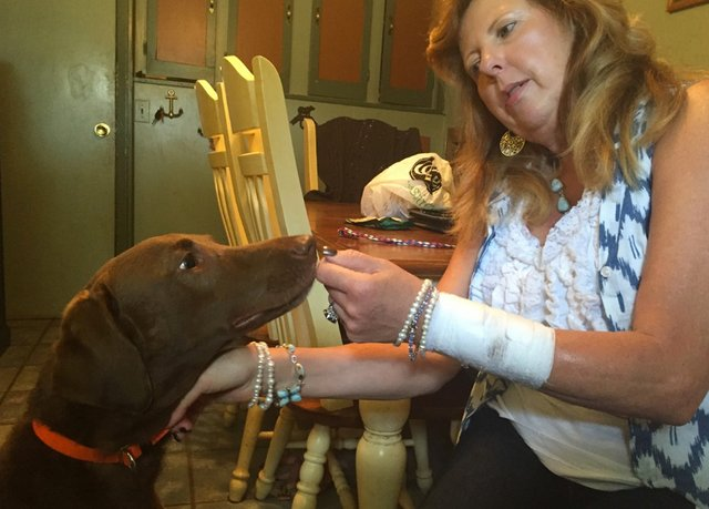 Dog stabs owner with knife in Hudson, family in disbelief