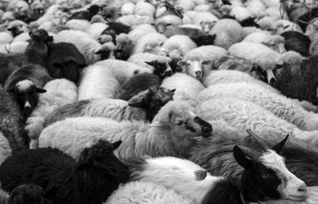 В мережі з'явився раритетний фільм про карпатських вівчарів, який знімали на Верховинщині (відео)