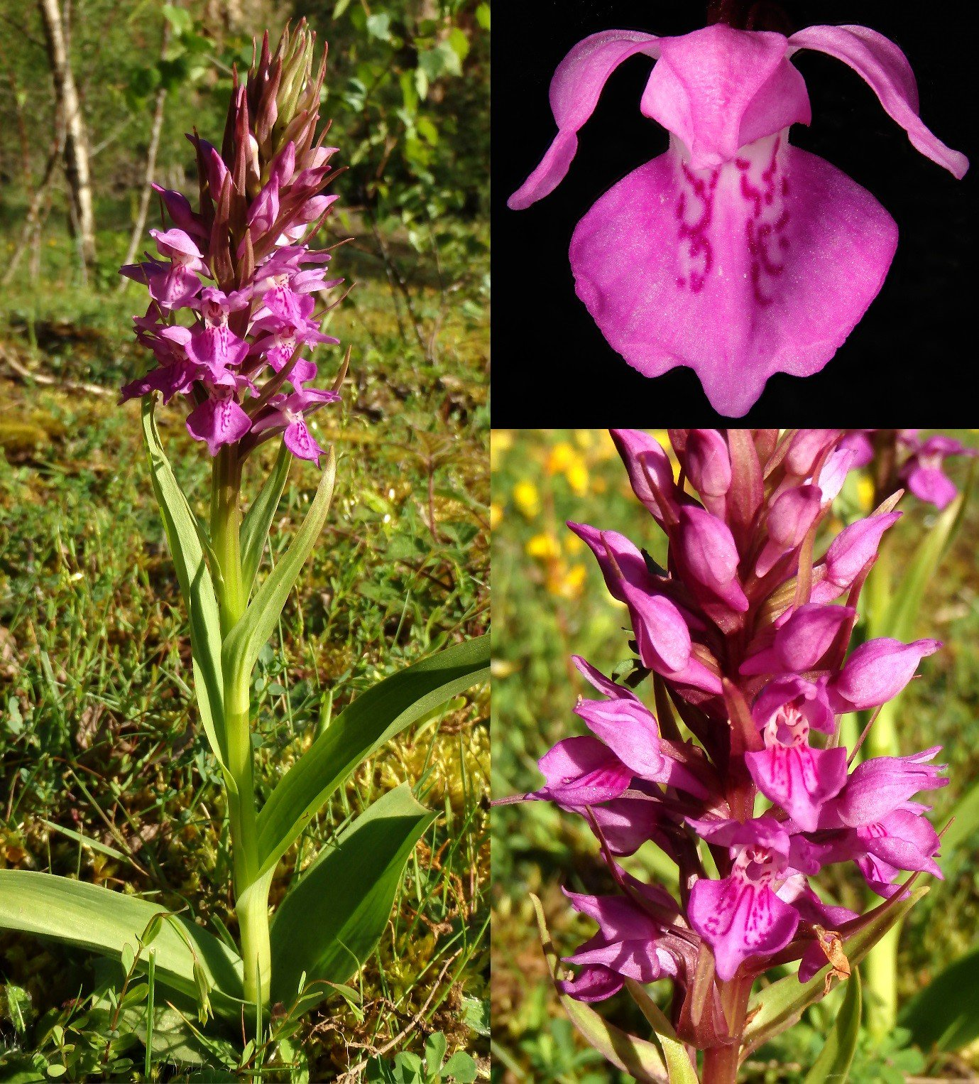 Thumbnail for Botanical Beauties