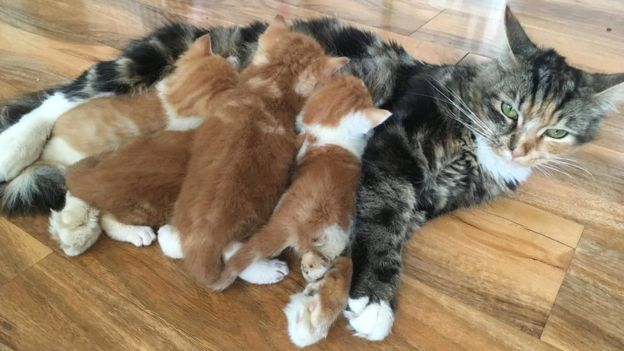 Adorable 'tumble dryer' kittens born in London dry-cleaners will melt your heart