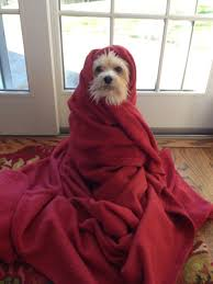 Grab that jacket, it's 3C at 6 am. Going to a high of 18C this aft. Clouds increasing thru the day. Showers tonight.