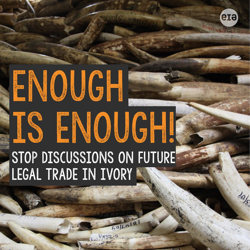 Great news for #elephants - mechanism for future trade in #ivory overwhelmingly rejected! @CITES #CoP17 https://t.co/UUVT4vwK6w