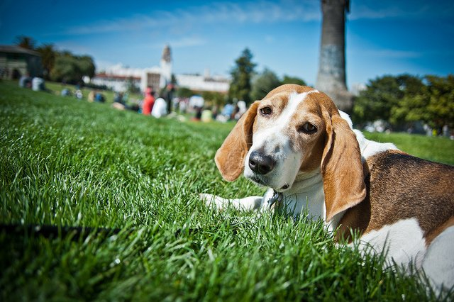 Sick of wasting your dog's poo, SF launches program to compost it.