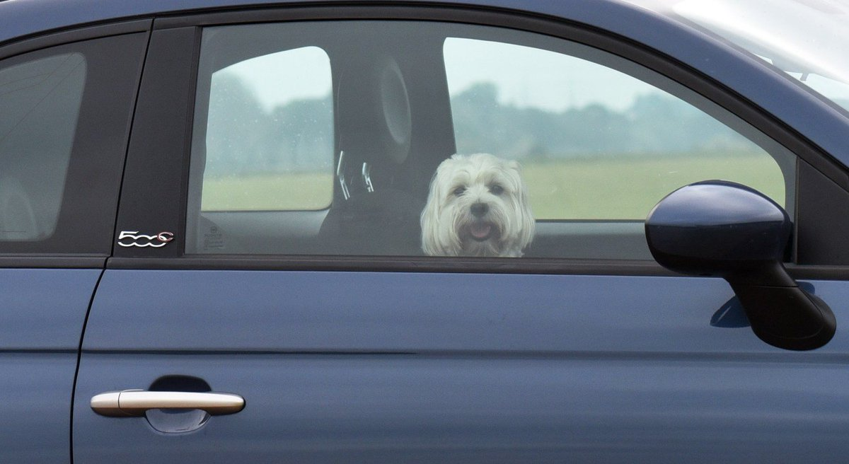 Californians Now Allowed To Break Window To Save Pets In Hot Cars
