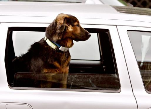 Pets in hot cars: Californians now allowed to break windows