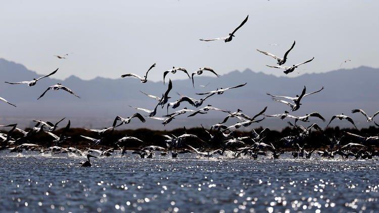 More than 100 earthquakes hit Salton Sea amid quake swarm