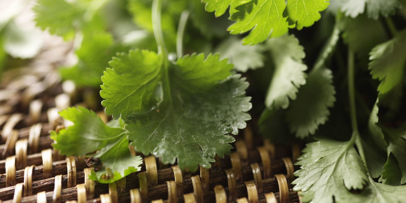 The scientific reason why you can't stand the taste of coriander https://t.co/qfhiWJYJOz https://t.co/mFF7Mkgqey