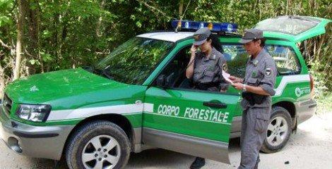 Forestali, attese nuove risorse per il sevizio antincendio - https://t.co/XstinuGZut #blogsicilianotizie