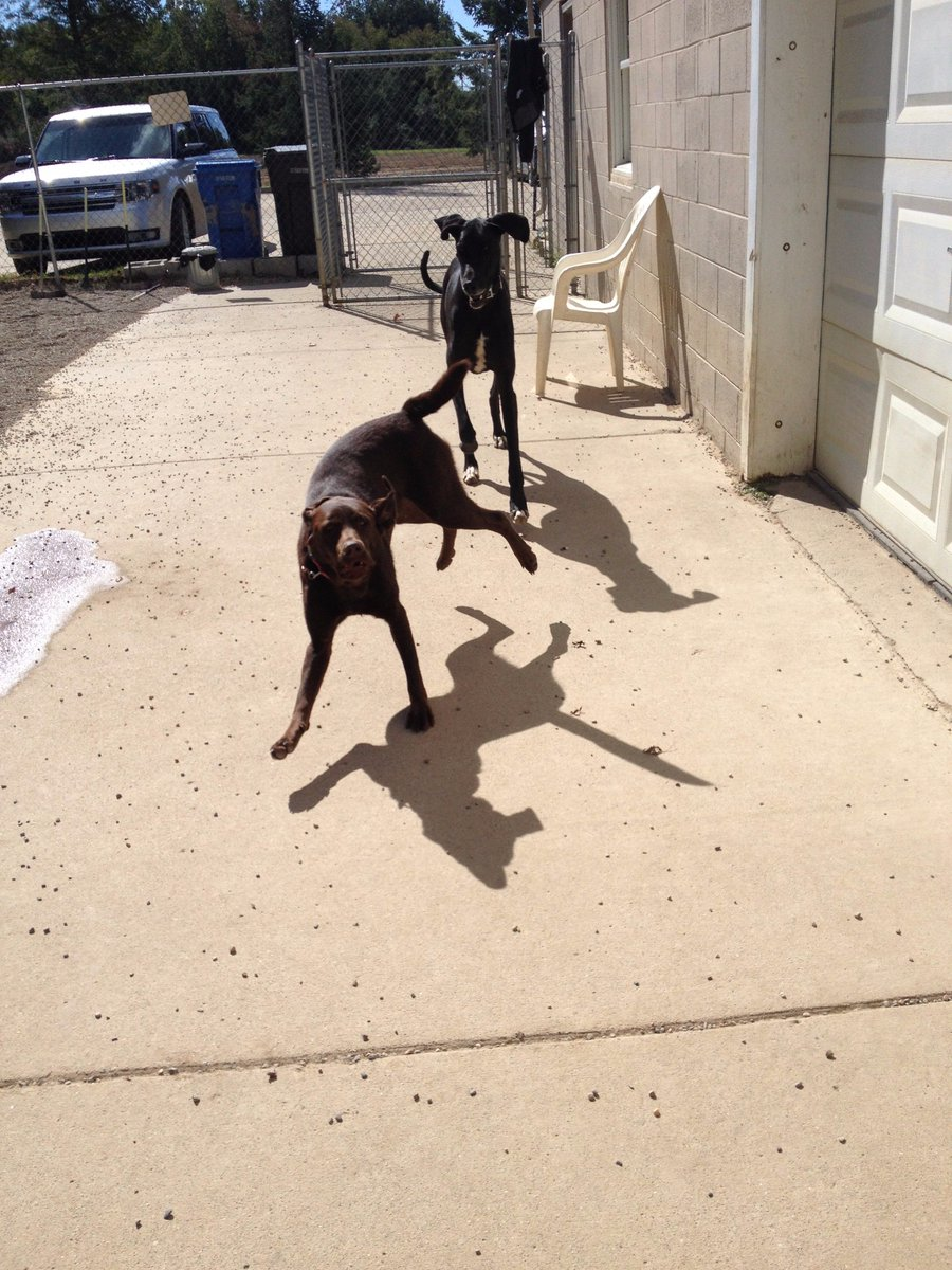 Agnes and Zeus love playing together at Bark Town!