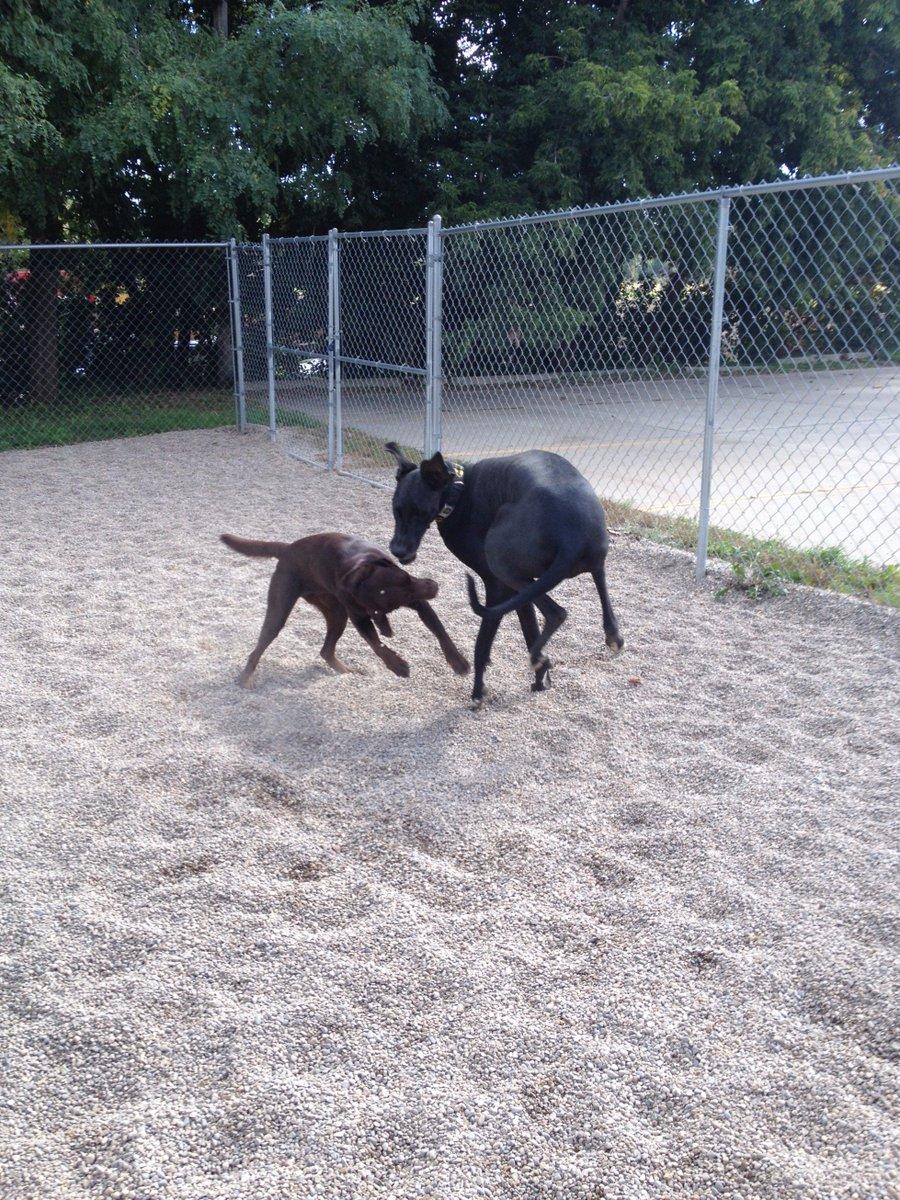 Zeus and Agnes dance around