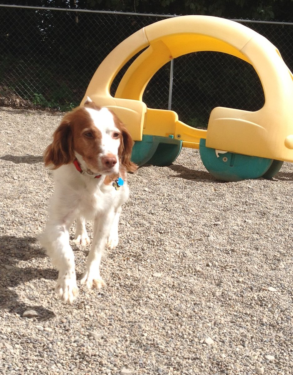 Marshall trots around the yard!