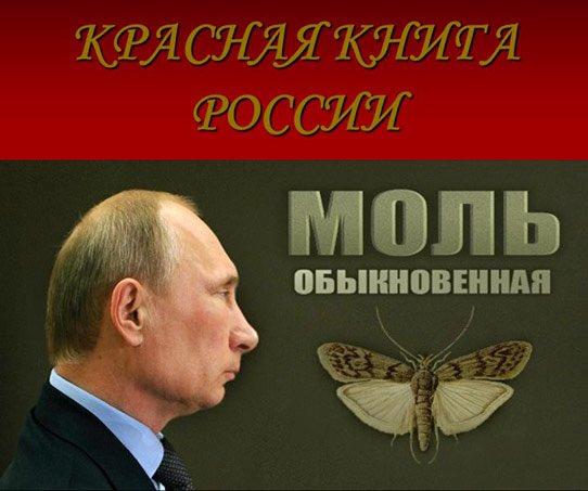 Руководство Франции не должно обижаться из-за вето РФ на резолюцию по Сирии, - Путин - Цензор.НЕТ 4539