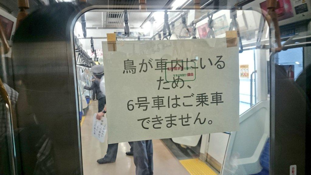 鳥が乗車中の京浜東北線(大宮行)、蒲田駅にて運転見合わせ #京浜東北線 #鳥