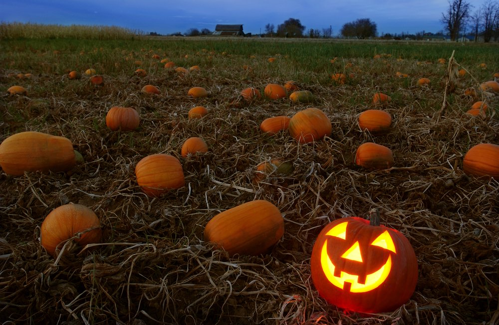 Local area Pumpkin Patches for this fall season abc13