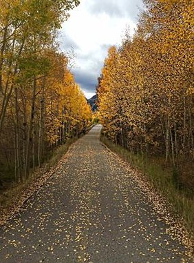 Color is still great in the high country. How long will it last? 9newsmorings 9news