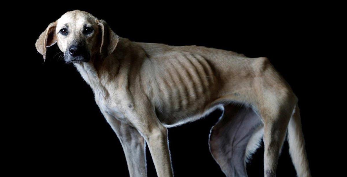 Las Tristes Imágenes De Perros Callejeros Que Muestran La