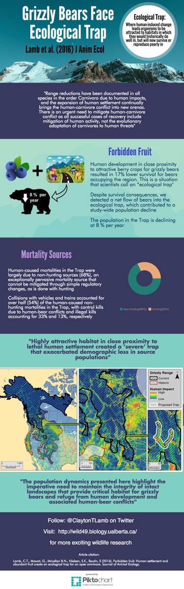 humans impact on grizzly bears essay