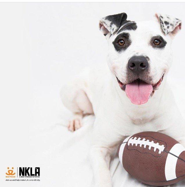 Join me for @BestFriends' #StrutYourMutt charity dog walk to help #SaveThemAll: https://t.co/uDK1VTxn5k https://t.co/E1P9ESMeHU
