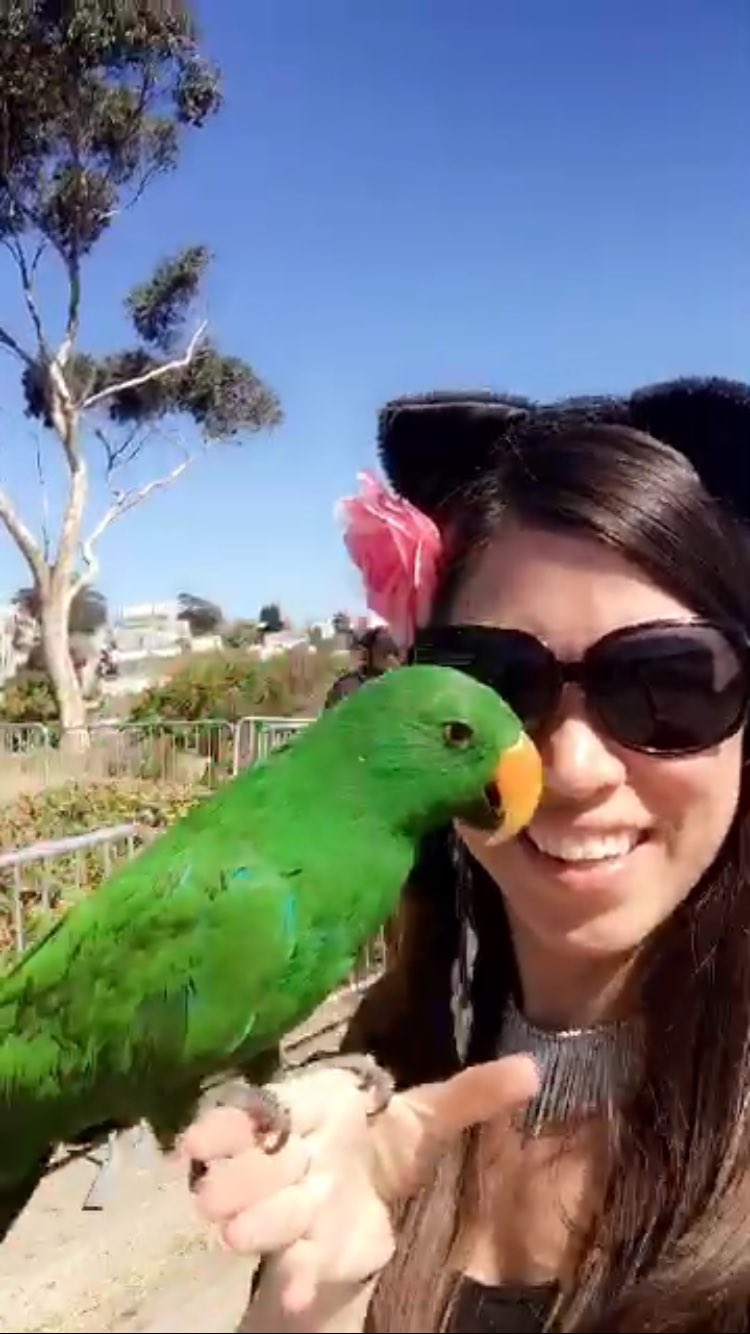 Hello to all the Chatters & Snapperz, from SF! Kitty Kisses & dancing birdies! Good afternoon! #chatsnap https://t.co/2d9ASCuHzP