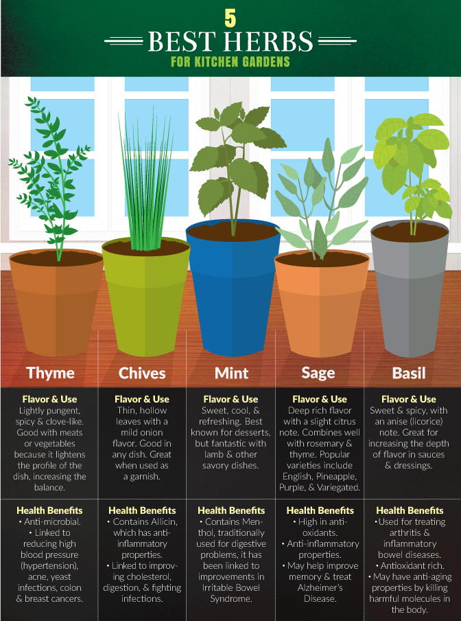 5 herbs you should grow in your kitchen: https://t.co/0n2mXGlmgd https://t.co/srTNWI4V8F