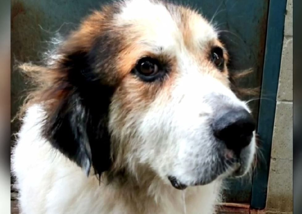 Lost dog travels 1K miles, reunites with owner -