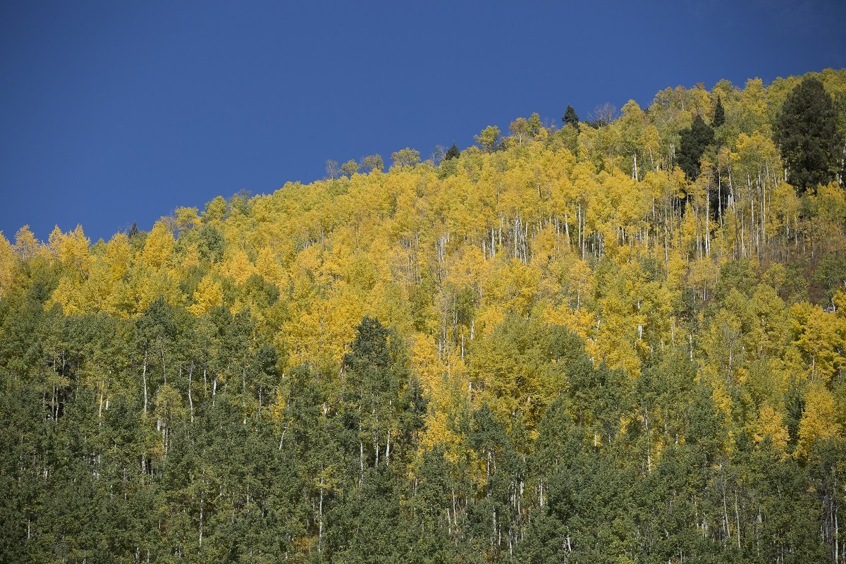 Weekend Likely Last For 'Vibrant' Fall Color As New Storm Brews