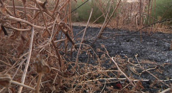 At 8pm: At least 20 fires intentionally set along Iron Horse Trail. Homes threatened. Arsonist on the loose.