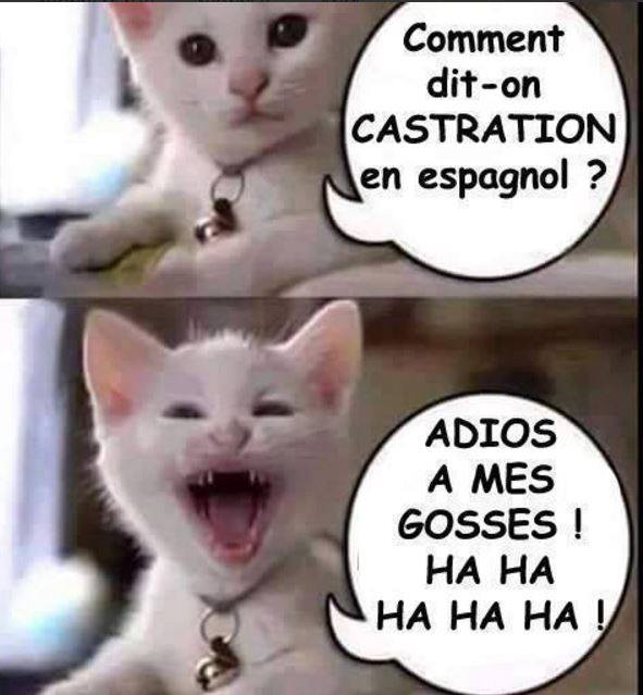 "Favori Internet M'a Tuer on Twitter: ""Un chat avertit #humour #blague  VT03"