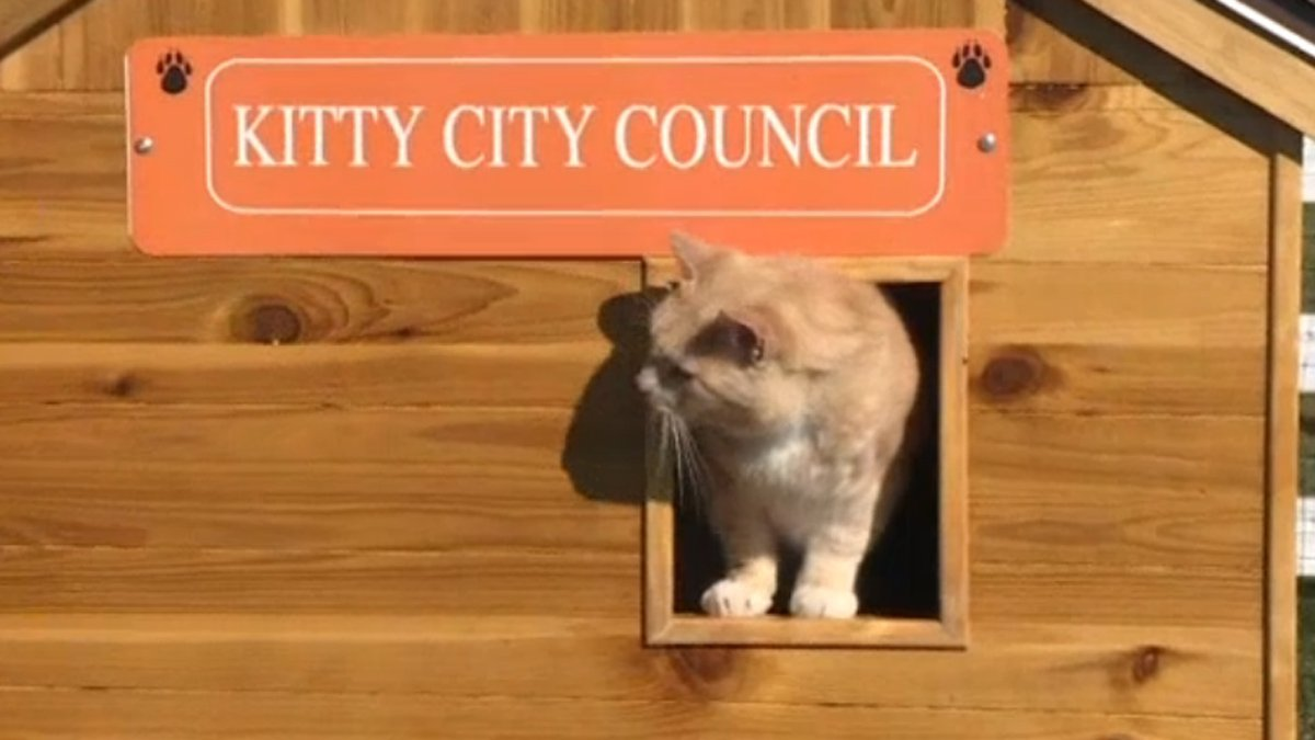 "Unwanted cats are always welcome at ""Kitty City"""
