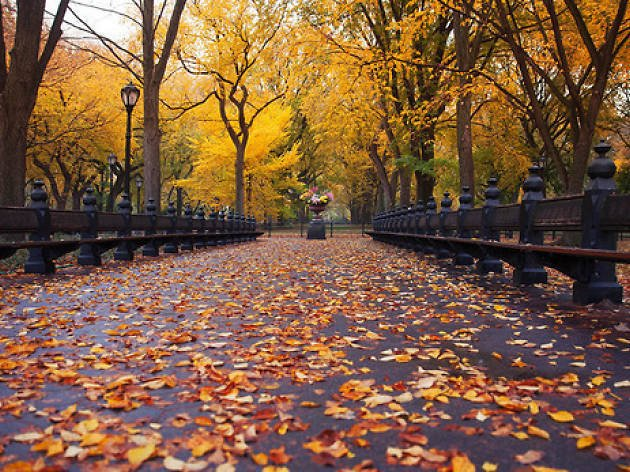 16 great things to do in New York when the weather turns crisp