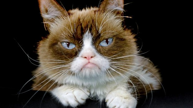 Grumpy Cat to join cast of Broadway show 'Cats'