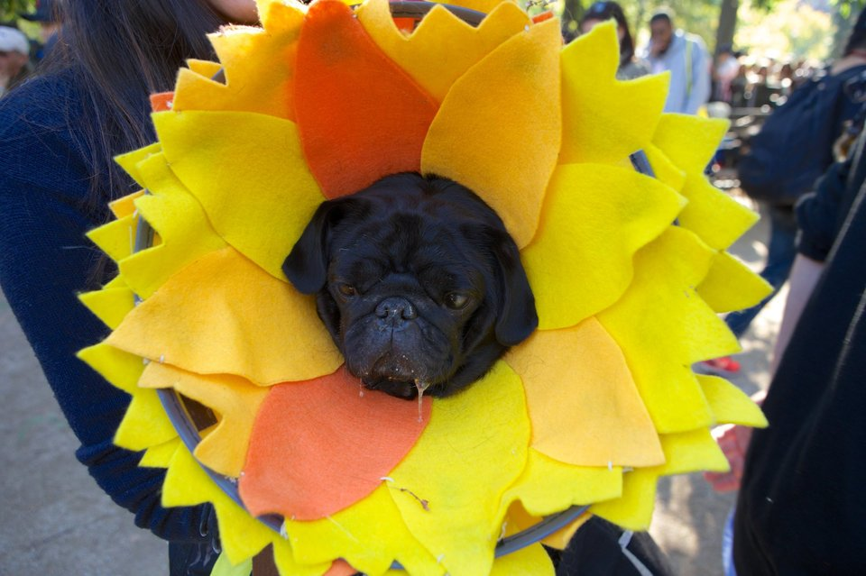 Get Ready: The Tompkins Square Park Halloween Dog Parade Returns October 22nd