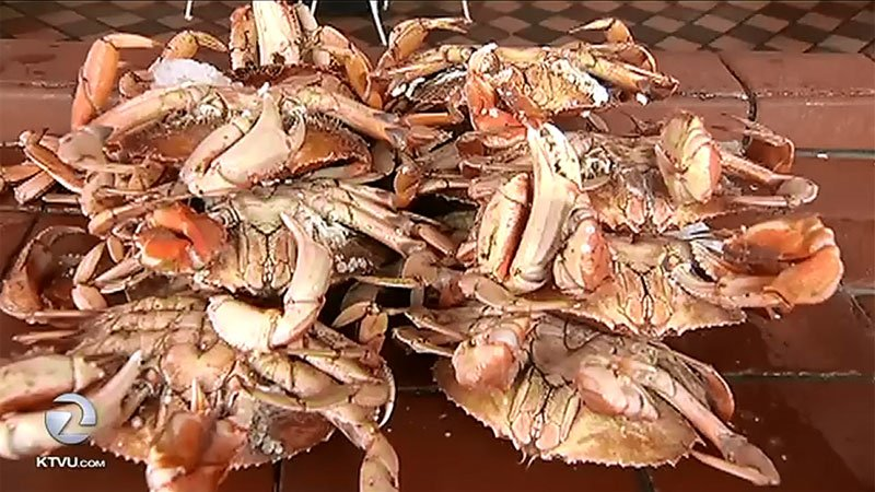 State health officials are testing Dungeness crab early this season