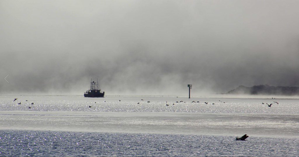 Great pic of the thick fog at the Bodega Bay Harbor this week.
