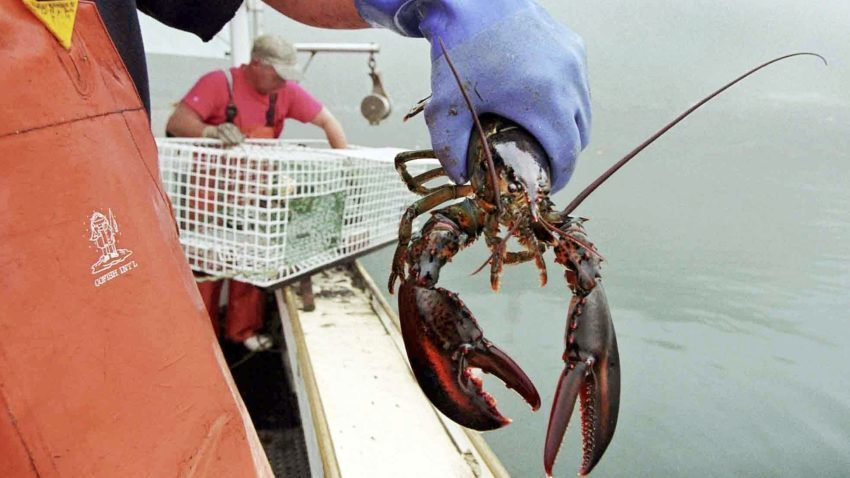 Massachusetts lawmakers are not happy with Sweden—which doesn't want our lobsters