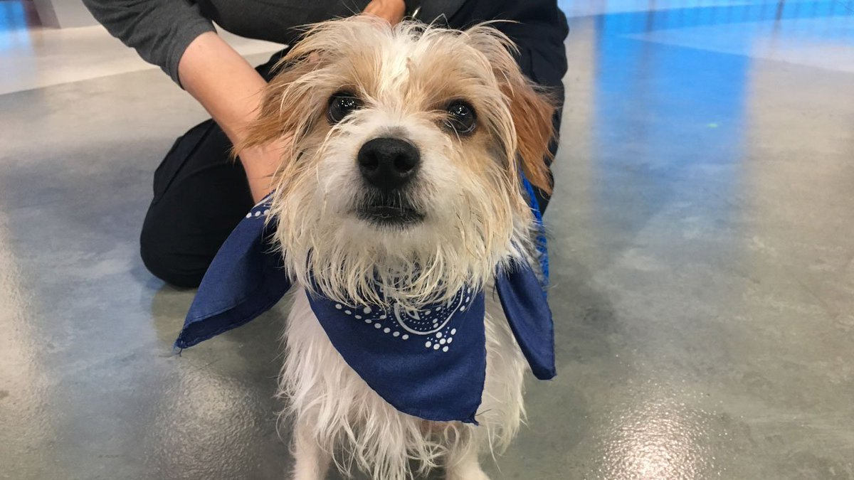 Say hello to Jacob! This 2-year-old terrier mix needs a good forever home