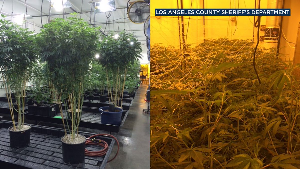 $7.5 million in marijuana seized during drug bust in unincorporated Compton