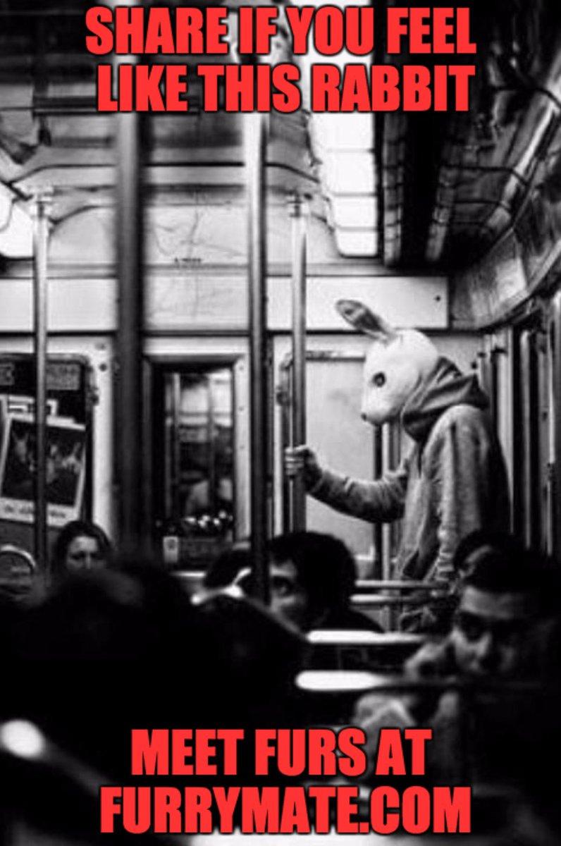 Rabbit dating site