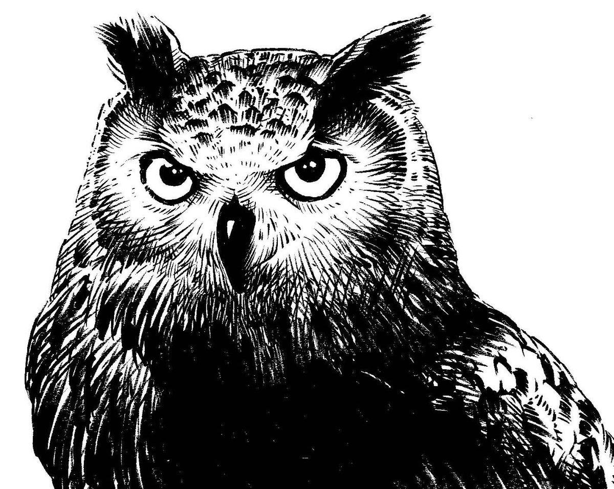 """いいちこインコ@漫画初版完売につき増版! on twitter: """"ウチの画像"""