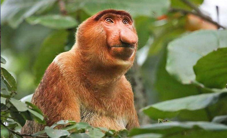 Remarkable, orange monkeys ass remarkable, very