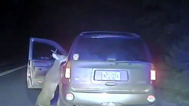 Deer attacks driver after getting hit by car