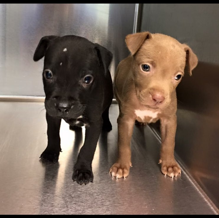 These darlings will be available on Saturday at Upper Darby Petco Race to Forever adoption event!