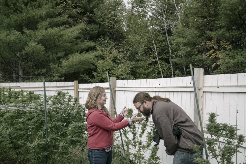 Maine's 'clean' medical marijuana: 'Organic' in disguise
