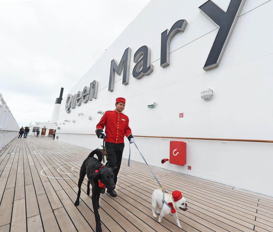 Sea dogs embarking on luxury journeys