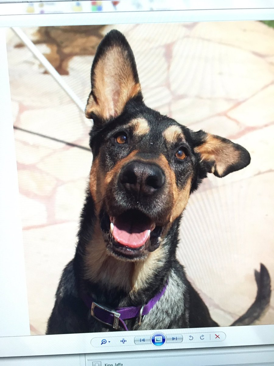 Omg here's Indy ! She's 3yrs old Shepard our pet 2 love please tune in and help ! CBSLA