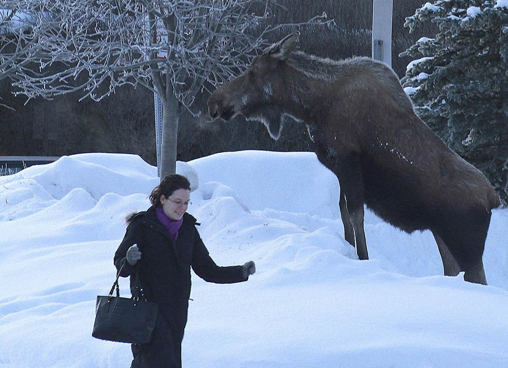 @nealrubin_dn: A hearty welcome to our newcomers from... Alaska?