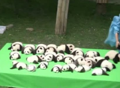 23 adorable panda cubs make their debut in China