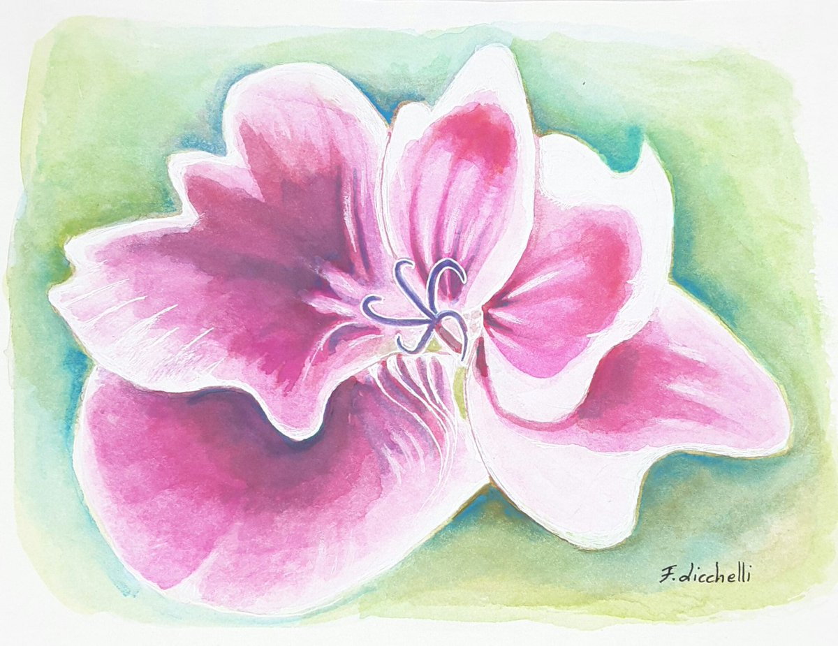 Francesca Licchelli On Twitter Pink Flowerswatercolouroriginal