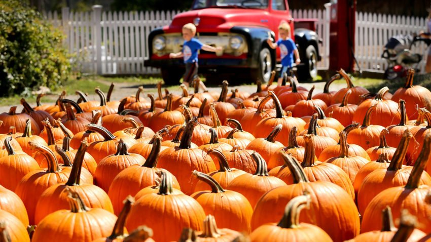 These are the most popular pumpkin patches in Massachusetts, according to check-in data
