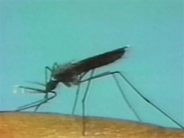6th human case of West Nile confirmed in Mass.